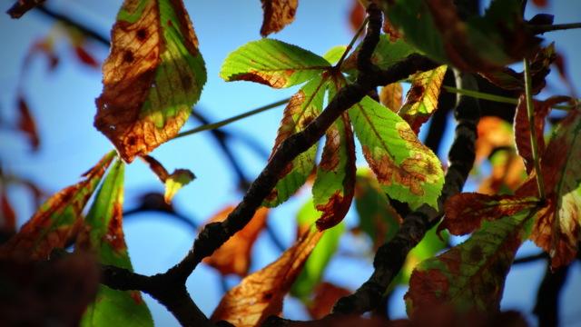 1-autumn 013