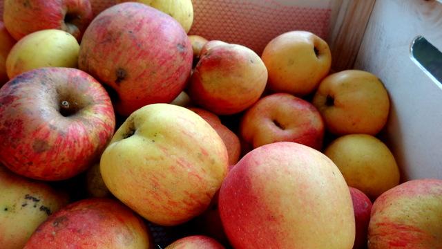 1-Pommes 021