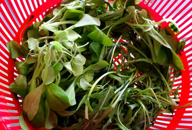 1-Salade oeuf 047